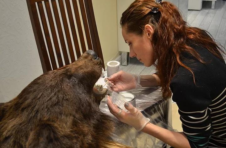 Экспресс реставрация предмета интерьера - чучело медведя в реставрационной мастерской RESTORER.EXPERT в Москве